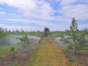 Watering of poplar trees